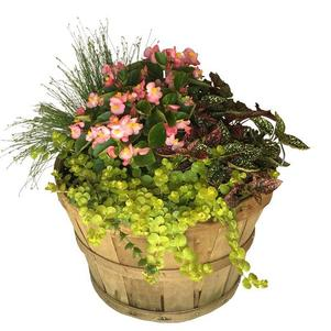 Basket Mixed Annuals Shady-Side