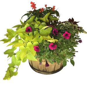 Basket Mixed Annuals Sunny-Side