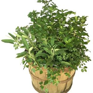 Basket Mixed Herbs